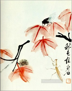 Chinese Painting - Qi Baishi likvidambra taiwan and the cicada traditional Chinese