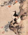 Shenquan cat traditional Chinese