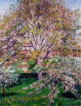 Trees Painting - wallnut and apple trees in bloom at eragny Camille Pissarro