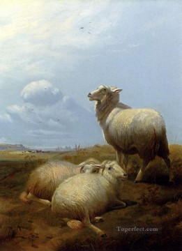thomas - Sheep At Pasture farm animals sheep Thomas Sidney Cooper