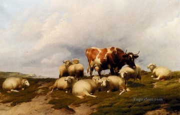 thomas - A Cow And Sheep On The Cliffs farm animals cattle Thomas Sidney Cooper