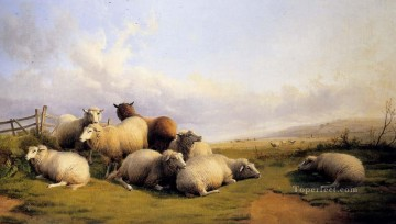 thomas - Sheep In An Extensive Landscape farm animals Thomas Sidney Cooper