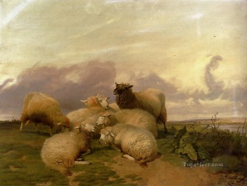 thomas - Sheep In Canterbury Water Meadows farm animals Thomas Sidney Cooper