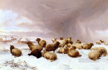 Sheep In Winter farm animals Thomas Sidney Cooper Oil Paintings