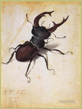 Cervus Lucanus Albrecht Durer Oil Paintings
