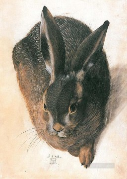 Hare Albrecht Durer Oil Paintings