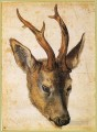 Head of a Stag Albrecht Durer