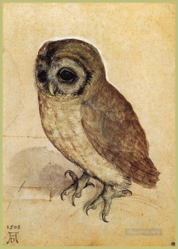 Albrecht Durer Painting - The Little Owl Albrecht Durer