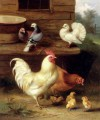 A Cockerel Hen And Chicks With Pigeons poultry livestock barn Edgar Hunt