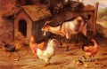 Fowl Chicks And Goats By A Dog Kennel poultry livestock barn Edgar Hunt