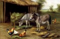 Donkeys And Poultry poultry livestock barn Edgar Hunt
