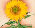 A Sunflower from Maggie Georgia Okeeffe American modernism Precisionism