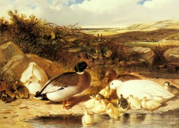 red Oil Painting - Mallard Ducks and Ducklings On A River Herring Snr John Frederick horse