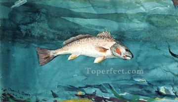 marine Oil Painting - Channel Bass Realism marine painter Winslow Homer