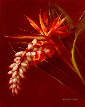Bird Of Paradise flower Johan Laurentz Jensen flower Oil Paintings