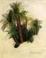Study Of Palm Trees Edward Lear