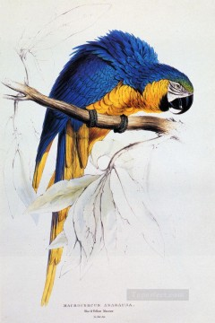 Ear Works - Blue And Yellow Macaw Edward Lear