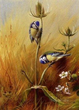 blue Painting - Bluetits On A Teasel Archibald Thorburn bird