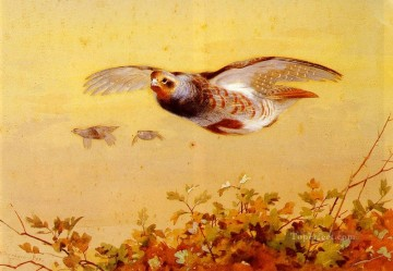 Light Painting - English Partridge In Flight Archibald Thorburn bird