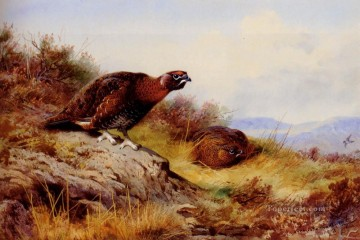 red Oil Painting - Red Grouse On The Moor Archibald Thorburn bird