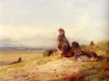 red Oil Painting - Red Partridges Archibald Thorburn bird