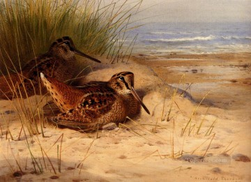 beach Painting - Woodcock Nesting On A Beach Archibald Thorburn bird