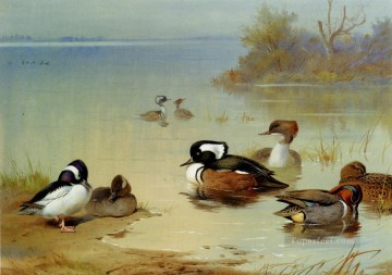 American Art Painting - Buffel Headed Duck American Green Winged Teal And Hooded Merganser Archibald Thorburn bird
