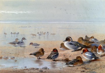 Shore Painting - Pintail Teal And Wigeon On The Seashore Archibald Thorburn bird
