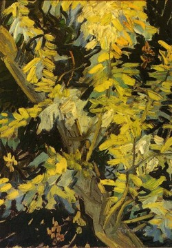 Gogh Canvas - Blossoming Acacia Branches Vincent van Gogh