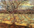 Apricot Trees in Blossom Vincent van Gogh
