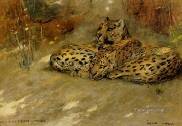 African Oil Painting - Study Of East African Leopards Arthur Wardle