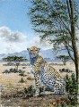 Cheetah on the Savannah African