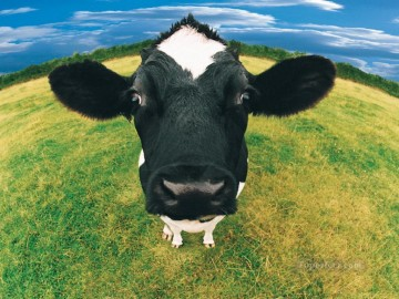 realistic cow Oil Paintings