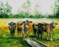 beefmaster cattle louise miller