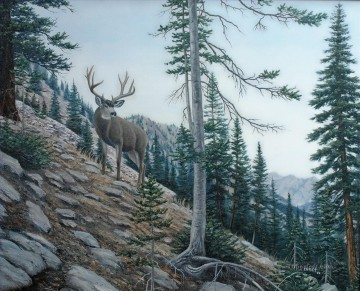 High Country Muley Oil Paintings