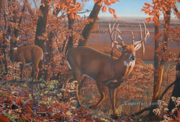 Wishful Thinking whitetail Oil Paintings