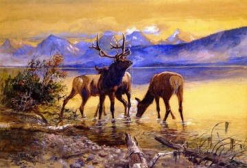 Animal Painting - elk in lake mcdonald 1906 Charles Marion Russell deer