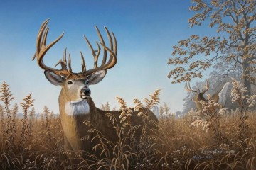 whitetail 07 Oil Paintings