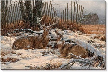 Windbreak Refuge Whitetail Deer Oil Paintings