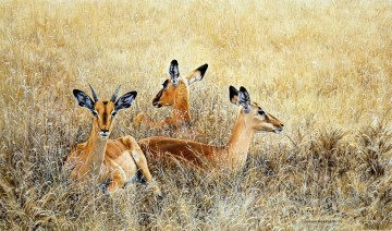 Animal Painting - impalas resting