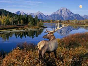 Nature Painting - nature whitetail mountains