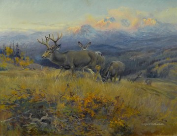 am104D13 animal deer Oil Paintings