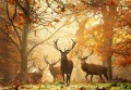 autumn deer photograph