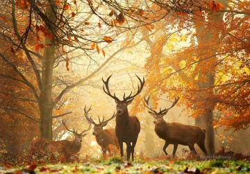 autumn deer photograph Oil Paintings