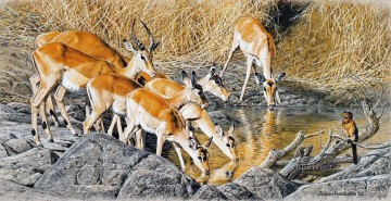 Deer Painting - impalas drinking