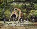 duelling giraffes and birds