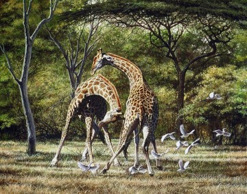 duelling giraffes and birds Oil Paintings
