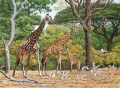 giraffe herd and birds