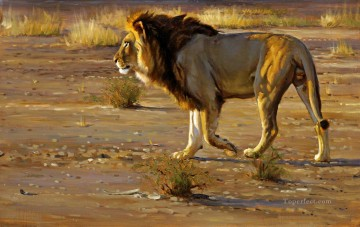 lion 10 Oil Paintings