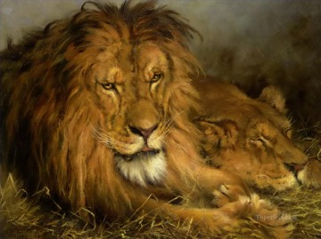 lion 4 Oil Paintings